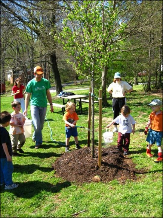 planting diverse trees